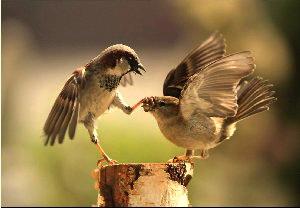 как отключить внутренний диалог